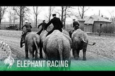 Embedded thumbnail for Quando i cavalli annoiano, si  passa agli elefanti