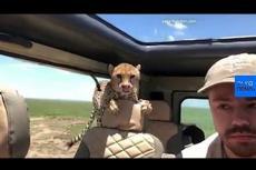 """Embedded thumbnail for Un ghepardo molto curioso. """"L'esperienza più terrificante della mia vita"""""""