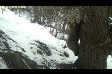Embedded thumbnail for Il risveglio degli orsi