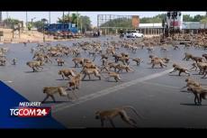 Embedded thumbnail for Con il mondo in quarantena, gli animali girano per le città
