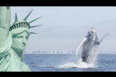 Embedded thumbnail for Le balene tornano a New York